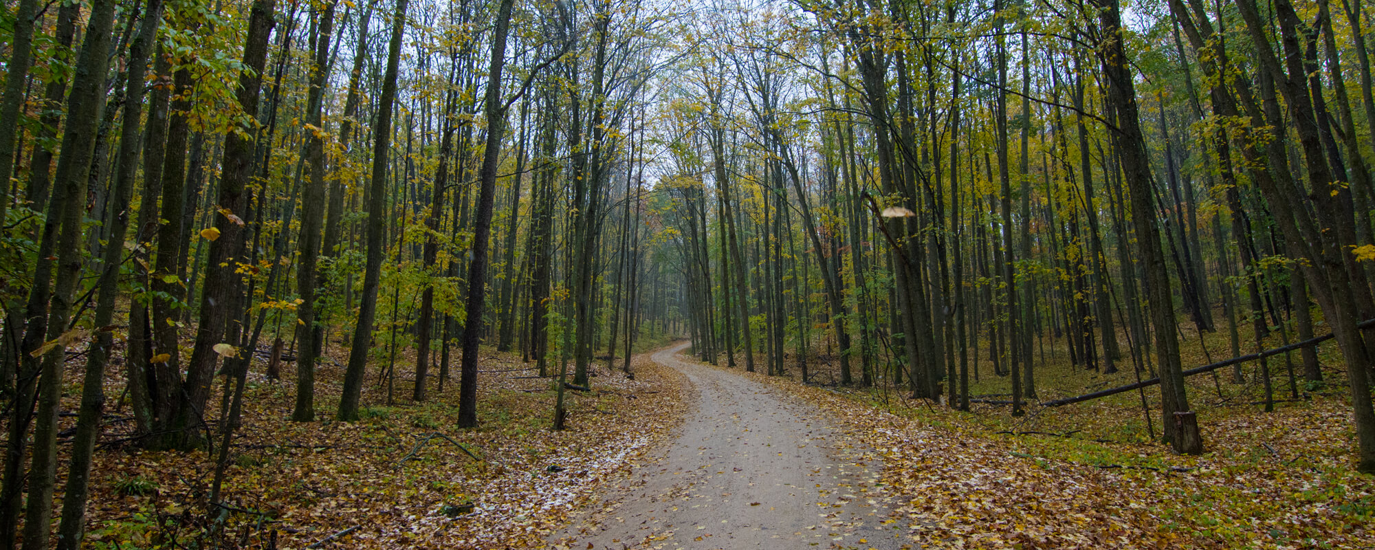 trail through Huron-Manistee National Forest